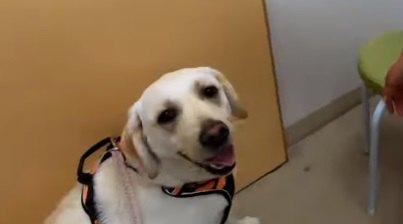 成功?失敗?「オヤツ作戦」で犬が診察台に乗ってくれるか試してみた!
