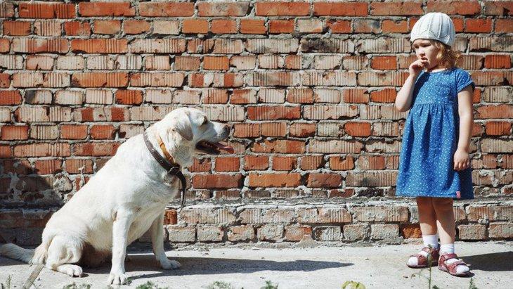 動物を飼ったことがない人が「飼いにくい」と感じる犬の特徴とは?