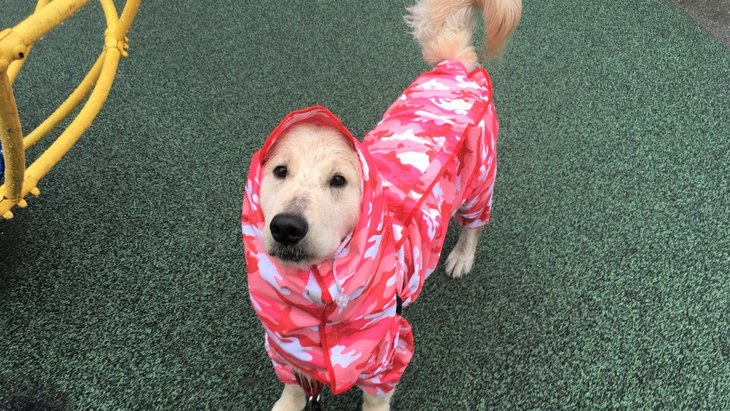 雨の日に大活躍★大型中型犬用レインコートのレビュー♪