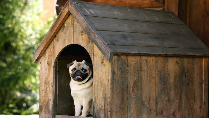 犬を外で飼うと寿命が縮まる理由3つ