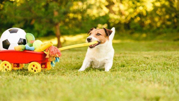 犬との遊び時間は何分くらいがベスト?遊びすぎるデメリットとは?