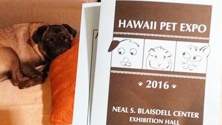 ウメとの〜んびり! in Hawaii 〜ウメちゃんHawaii Pet Expoへ遊びに行く!編〜