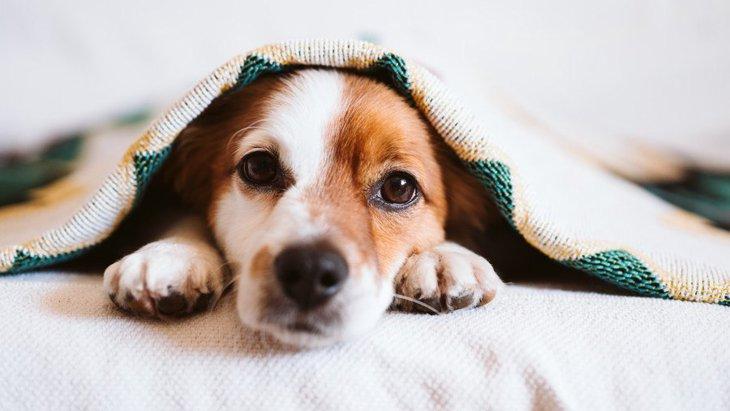 犬が『一緒に寝よう♡』と誘っている時の仕草や行動3選