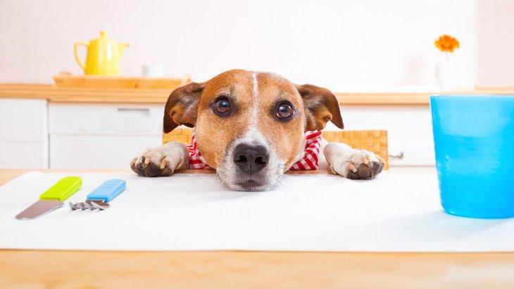 犬がウェットフードしか食べない原因と改善策