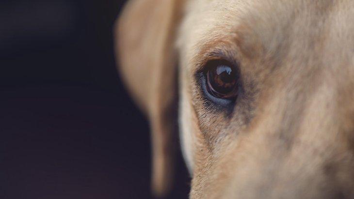 犬も老眼になるって本当?老化に伴う目の変化