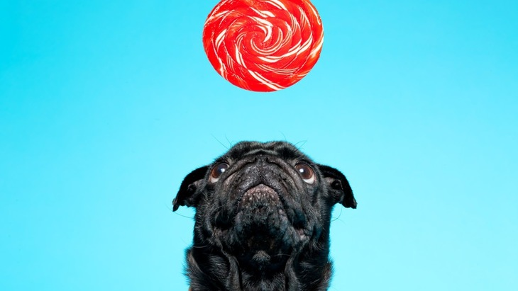 犬が飴を食べてしまった時の対処法と簡単な対策