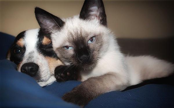 犬猫の飼育数が人間の子どもの数を上回る逆転現象に!