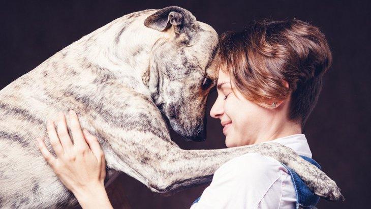 犬は人の『悲しみ』を理解できるの?