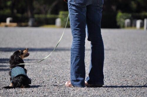 犬の散歩の仕方について