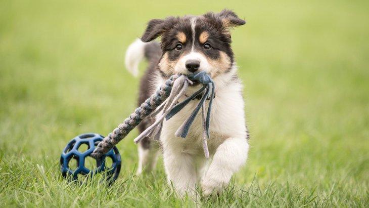 おもちゃの名前を覚える犬は特別な才能を持つ子?【研究結果】