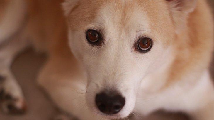 愛犬が主人にアイコンタクトして来る理由