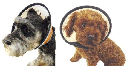 犬のエリザベスカラーを手作りする方法!エリマキトカゲのような保護具。
