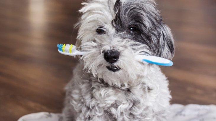 犬が歯磨きを嫌がる心理5選!落ち着いてもらうためのコツは?