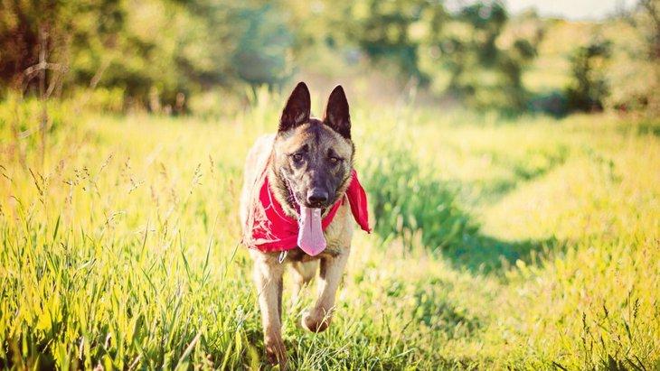 犬が多汗症になる原因と主な症状、治療や予防まで