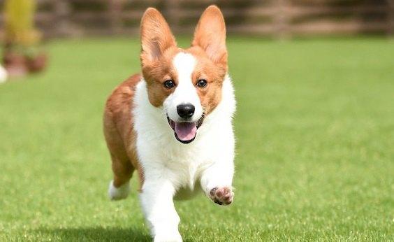 たくさん運動をするべき犬種3選!必要な運動量から飼う時の注意点まで