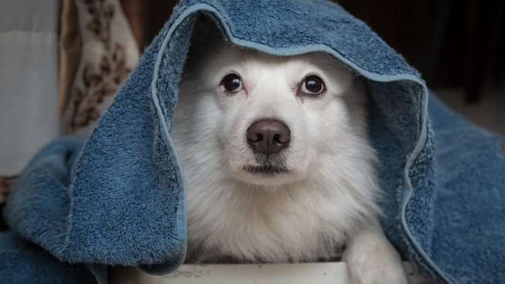 犬の為に備えておこう!地震のときに役立つ準備や覚えておきたい対応