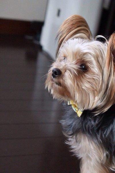うちの子が一番可愛い!愛犬フォトギャラリー(2)
