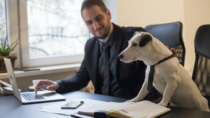 アメリカの会社が実証している「職場に犬を連れて来るメリット」