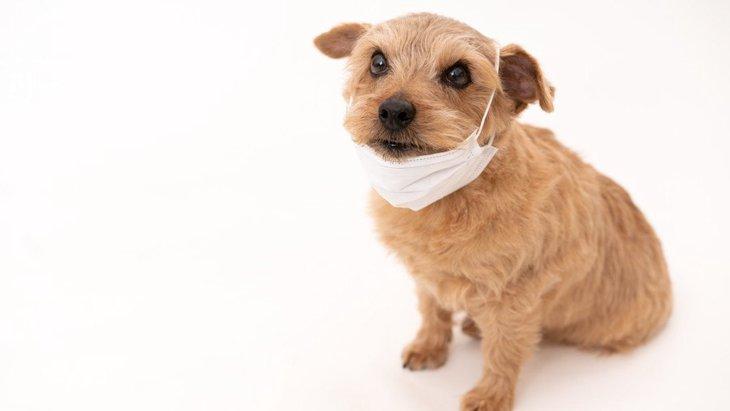 犬と新型コロナウイルスについての、ちょっとした『Q&A』5選