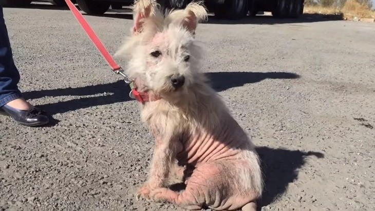 愛情を与えないなら飼わないで…中庭でネグレクトされ続けた小型犬