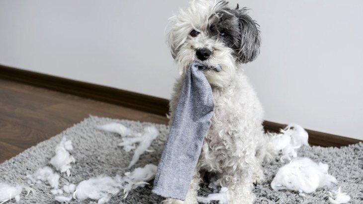 犬はなぜ臭いものが好きなの?4つの理由