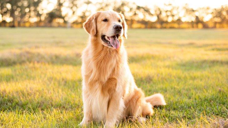 楽しく発散♡犬の『ストレス発散方法』5選