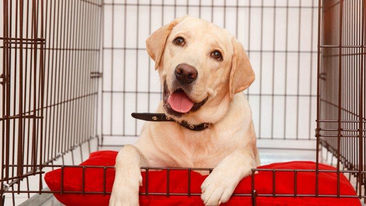 犬とずっと一緒に居続けるリスクとは?もしかしたら病気になることも…?