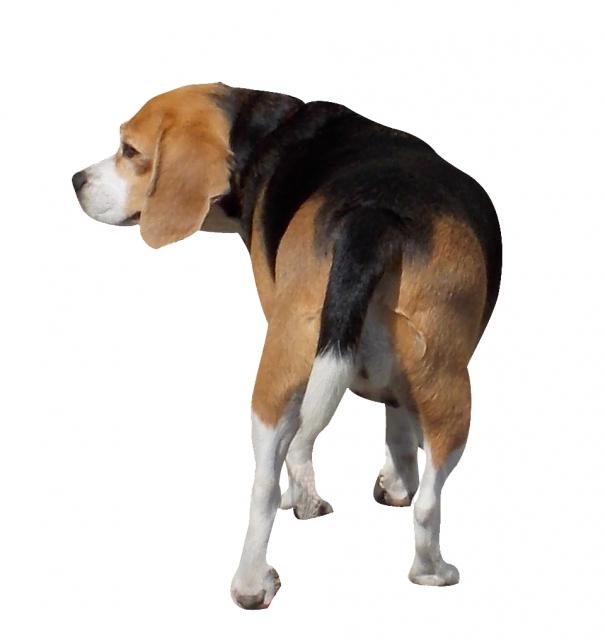 犬の気持ちは尻尾を振る方向でわかる!左は嫌い!右だと好き?