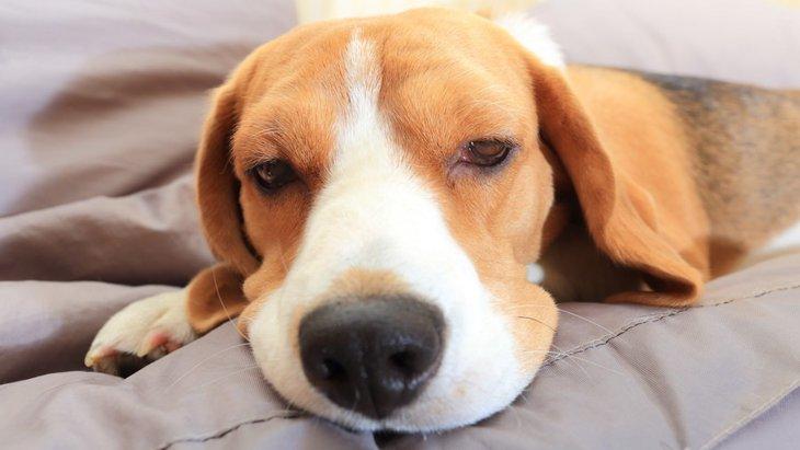 悪化する前に気づいて!犬の熱中症の初期症状4つ