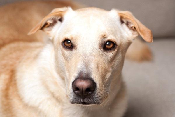 犬の顎がガクガクなる原因と対処法