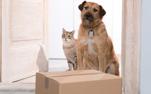 配達中にカシャッ!アメリカの宅配便ドライバーが運営する犬写真のSNS