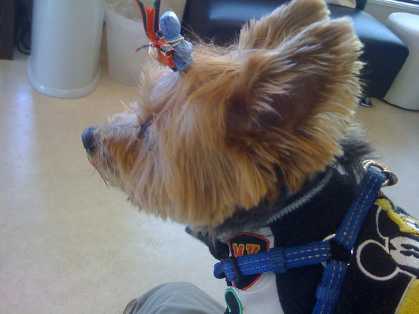 愛犬の血液型を知っていますか?
