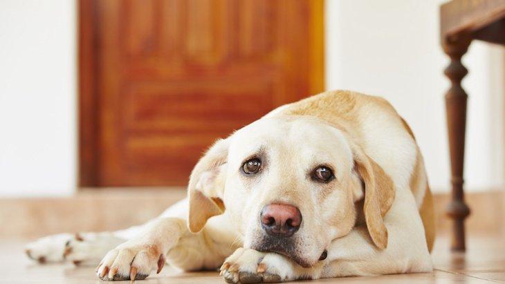 犬が飼い主を心配している時にする3つの仕草や行動