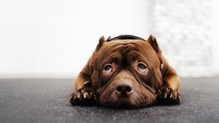 犬が自信を失っている時に見せる仕草5選
