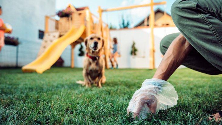 犬のウンチの間違った処理方法5選!NGな理由や正しい方法を解説