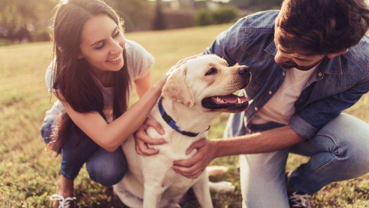 犬が人に見せる『大好きサイン』5選