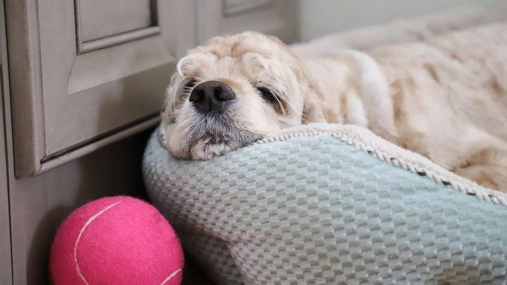 犬が凹んでいる時に見せる仕草や態度5つ