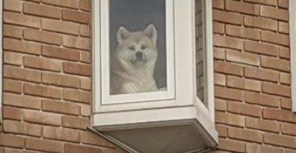 足を止めする人殺到?!ご近所名物『窓から覗くわんこ』の正体とは?