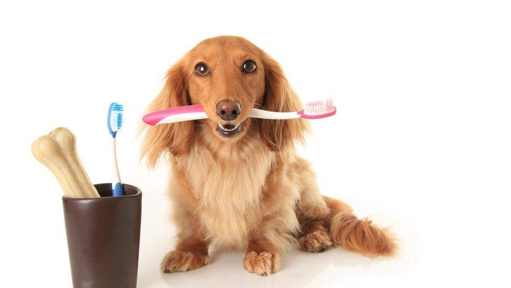 犬の歯が汚い原因と綺麗にする方法