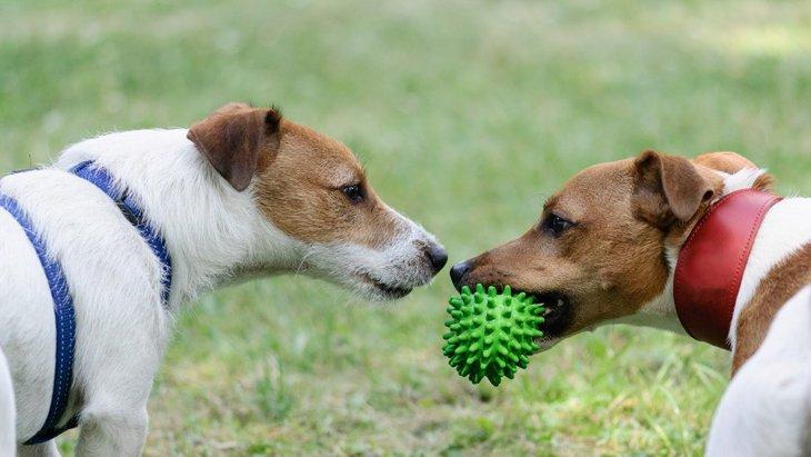 犬を多頭飼いしている飼い主が意識すべき「お留守番ポイント」