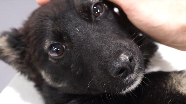 虐待され複数の骨折をした子犬を保護。黙って痛みに耐えた先の未来とは?