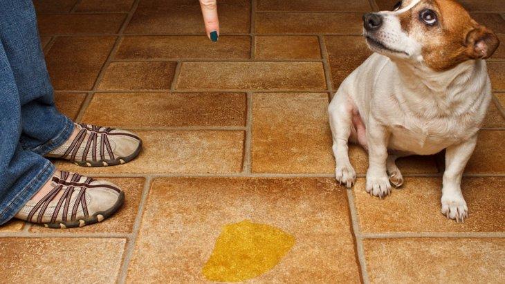 犬が隠れておしっこをするようになる2つの原因と改善方法