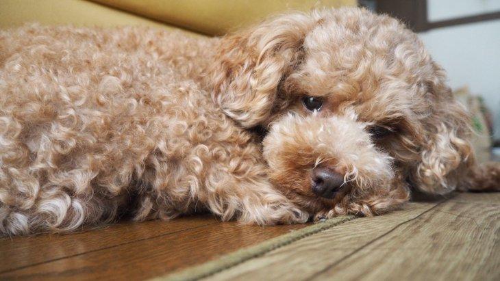 愛犬が飼い主に興味を無くした時に見せる仕草