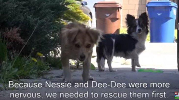 車から捨てられた3匹の犬。近所の人の協力で無事に保護成功!