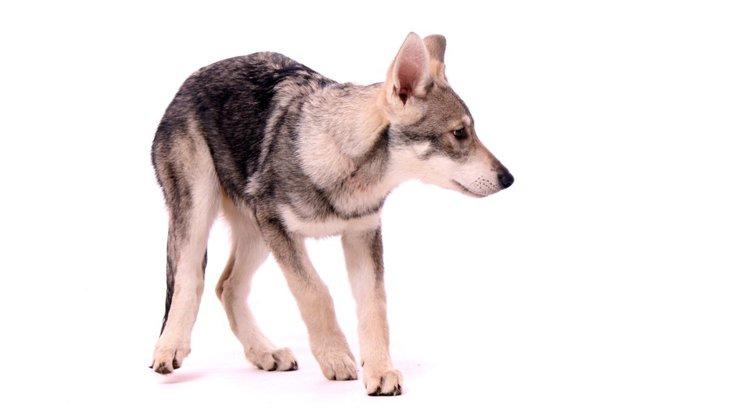 犬が後ずさりをする心理とは?