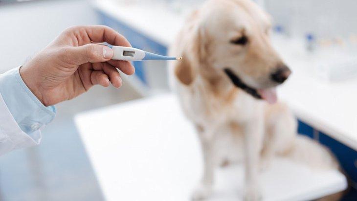 愛犬の体温、確認したことはありますか?