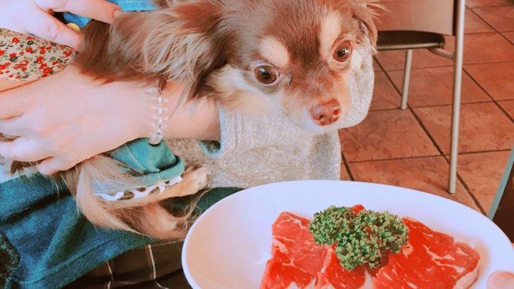 犬と一緒に楽しめる牛タン専門店「うしすけ」に行ってみた!