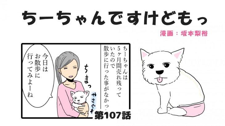 ちーちゃんですけどもっ【第107話】「ちーちゃんの子犬の時の話③」