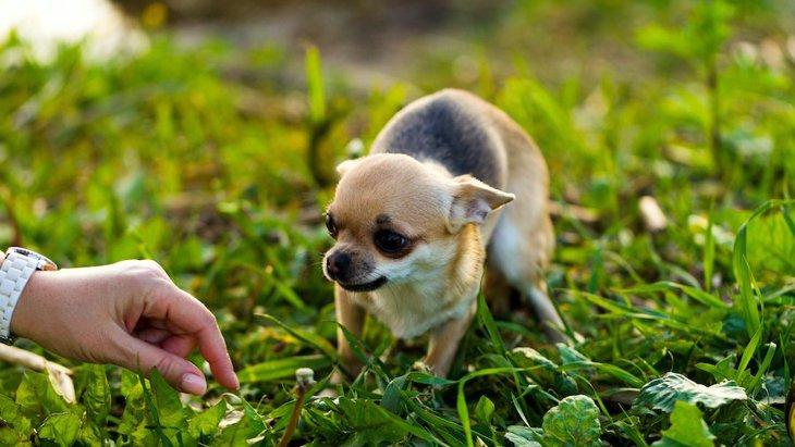 犬が『絶対に触られたくない人』にしている仕草や行動4選