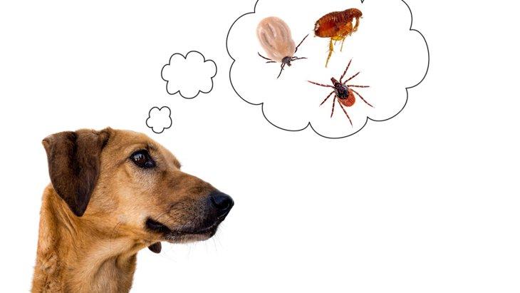ダニもノミもフィラリアも!?1つの駆除薬で犬もストレス軽減♪